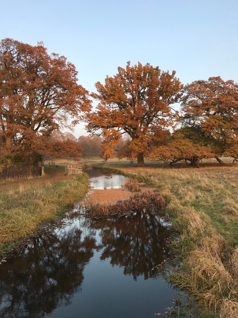 A view from a bridge, along a reflective serpentine river at Charlecote Park, with orange oak leaves all around.