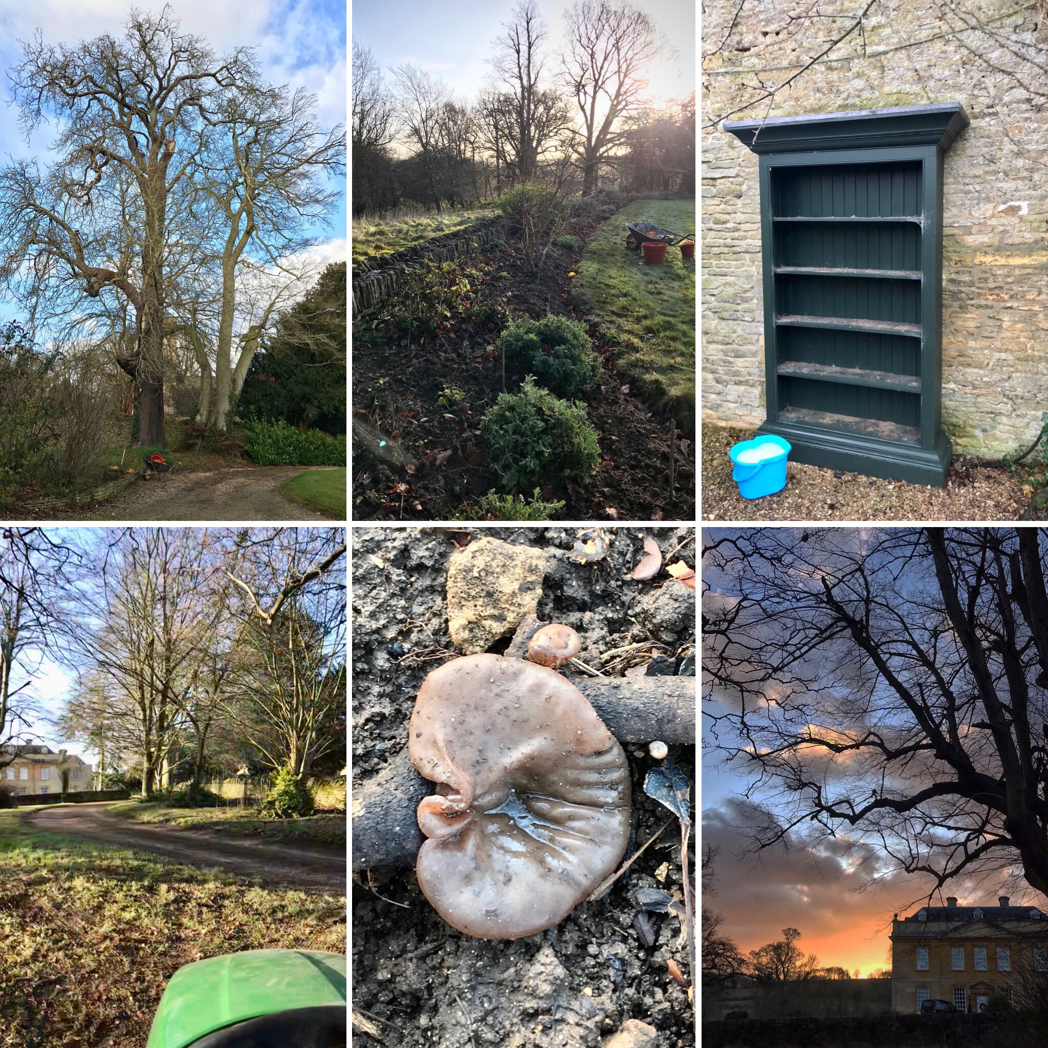 SixOnSaturday  images from my gardening ways journal for 14th December 2019
