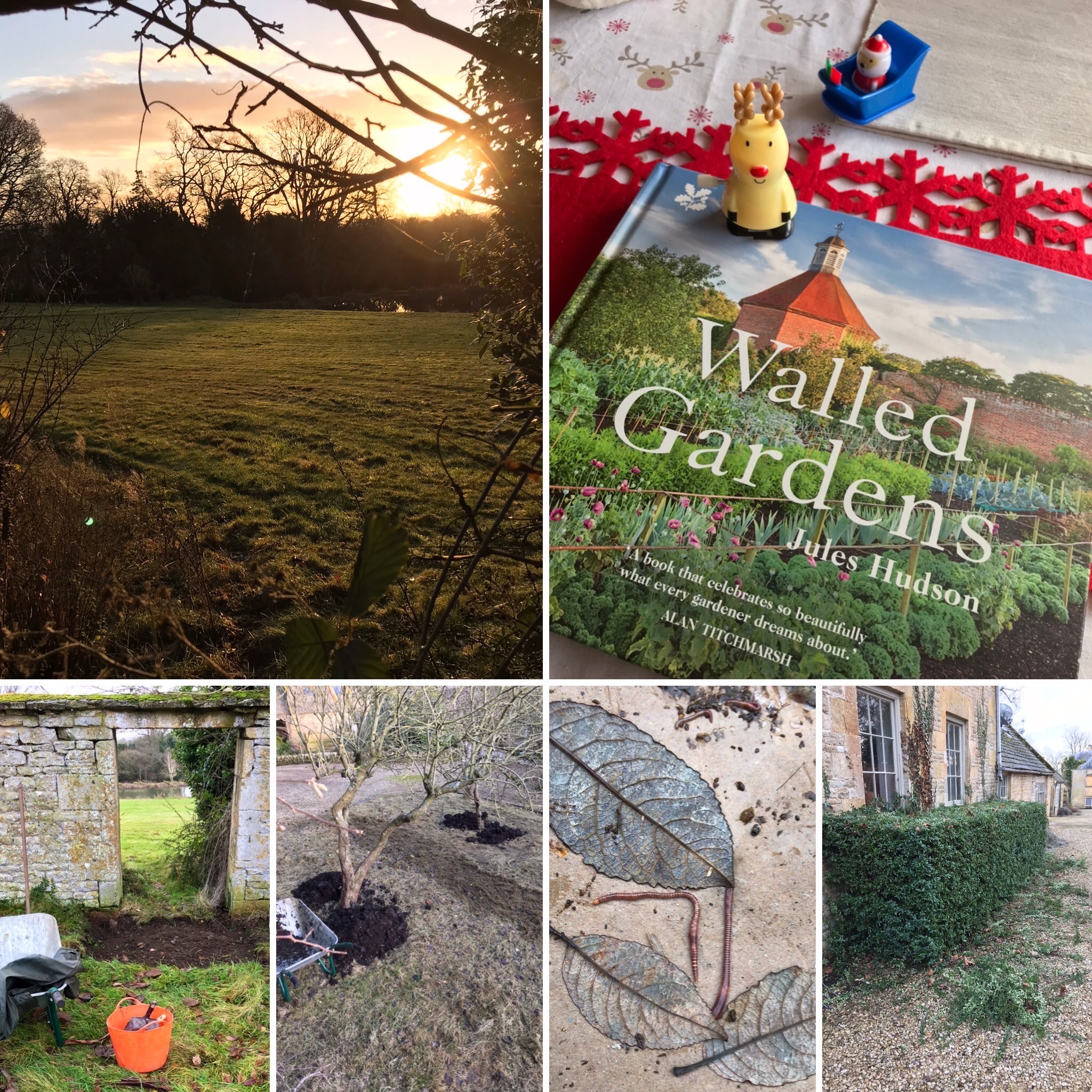 A Monday sunrise, garden archaeology, orchard mulching, composting, hedge trimming and a book for Christmas