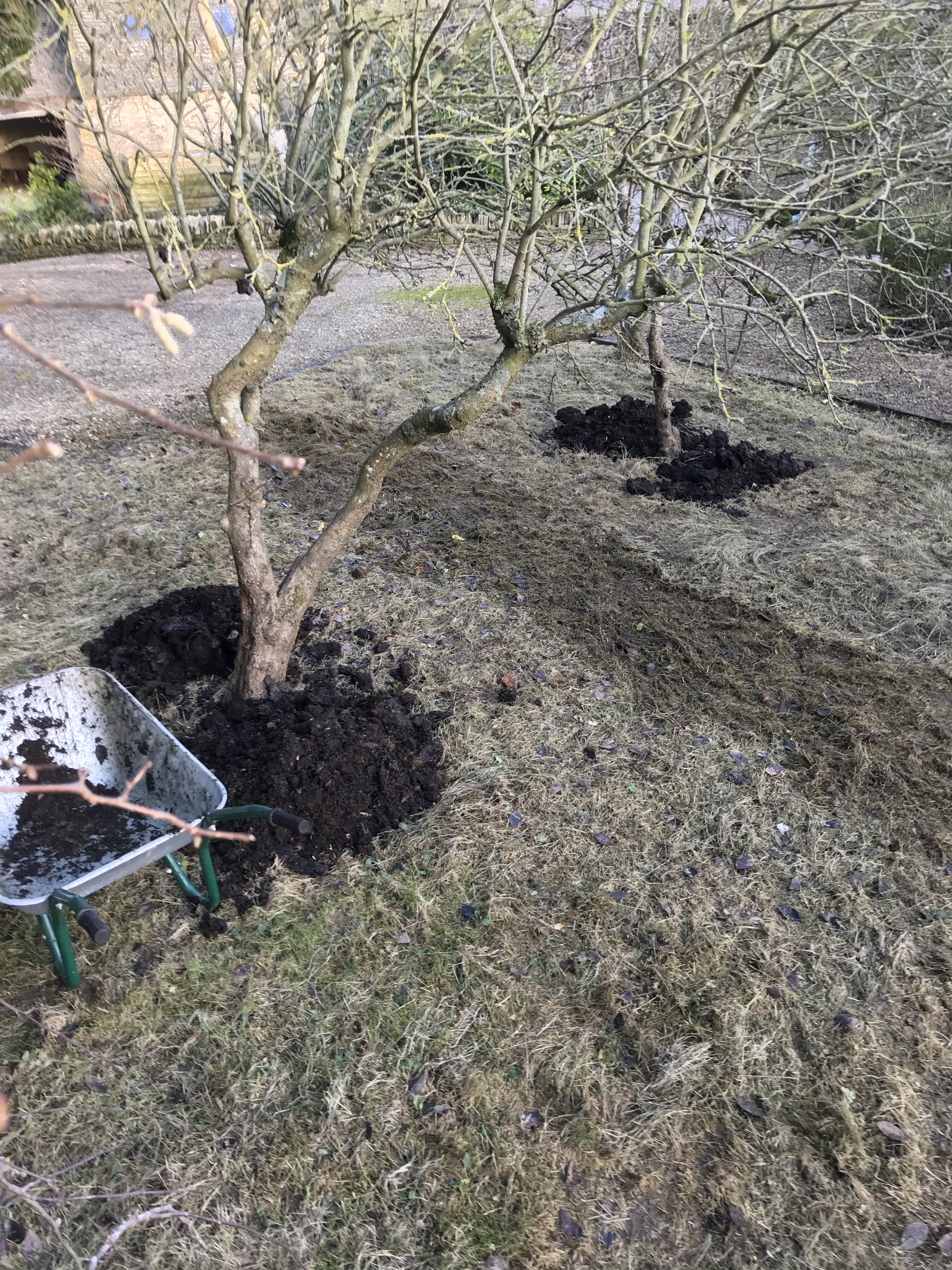 Composting trees in the orchard
