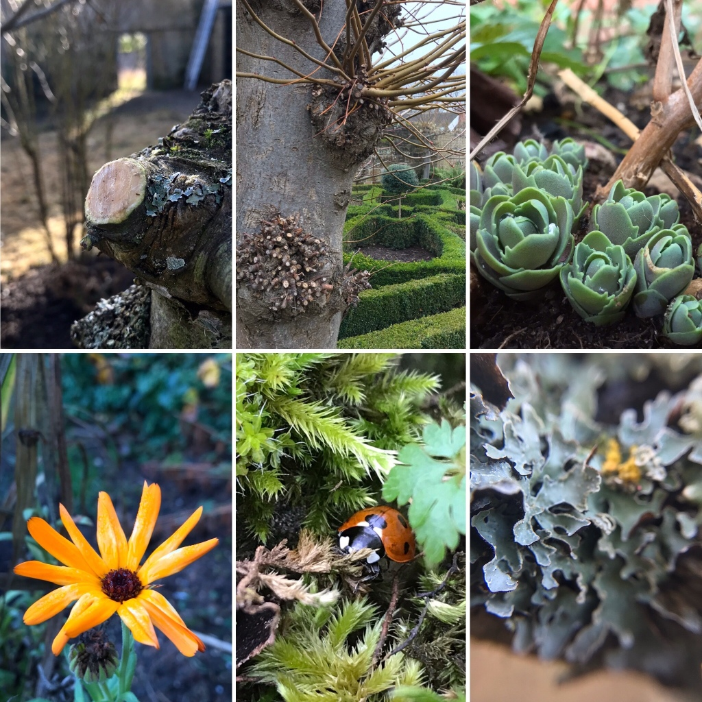 Six images from Gary Webb to tell the story of his gardening week