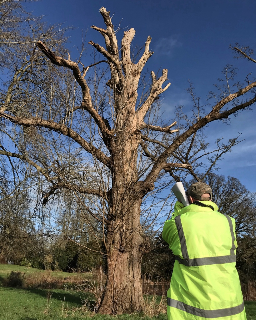 Looking closely at the incredible habitat of this decaying parkland sycamore tree