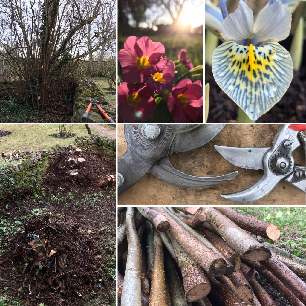 Images from my GARDENINGWAYS blog for February 22 2020