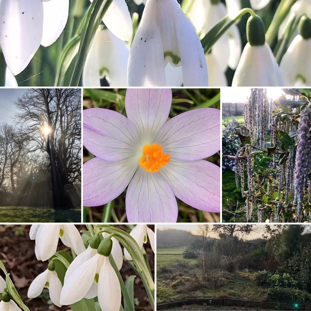 Six gardening images to illustrate my gardening week