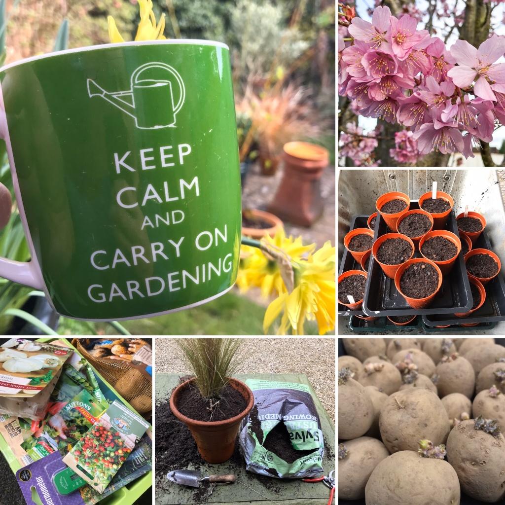 Garden tasks from Gary Webb's  Garden Journal 21.3.20