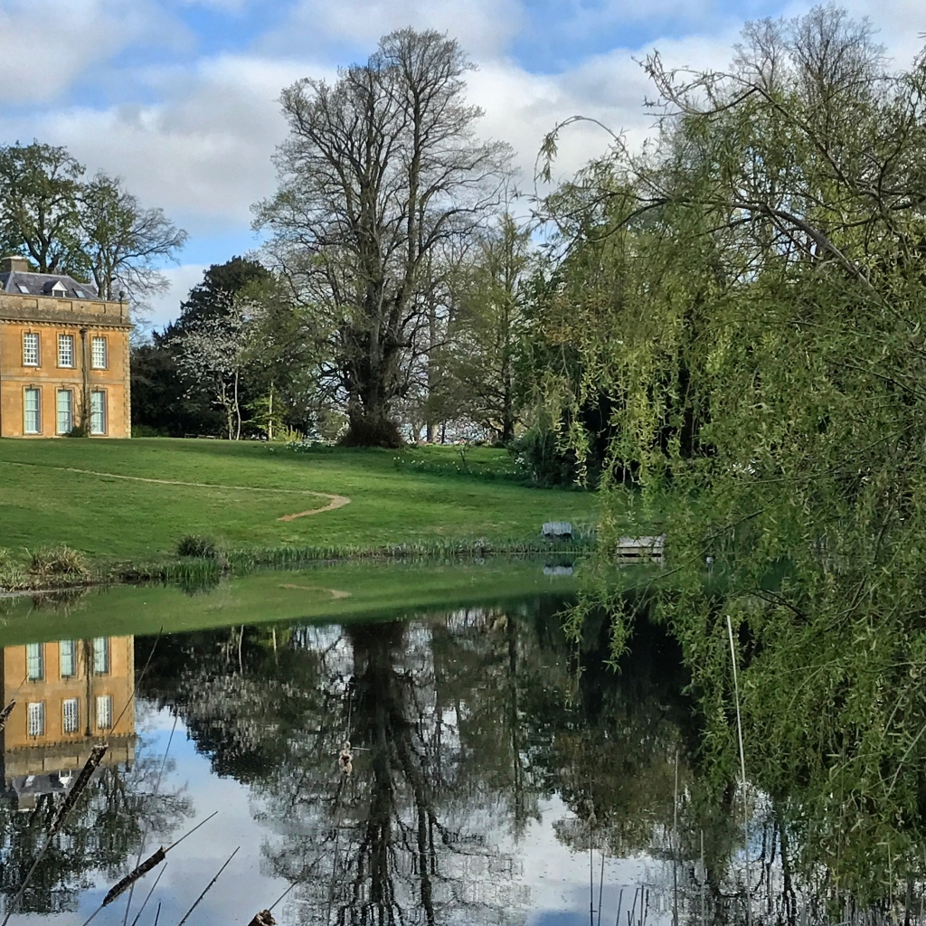Lime tree reflection at Broadwell Manor