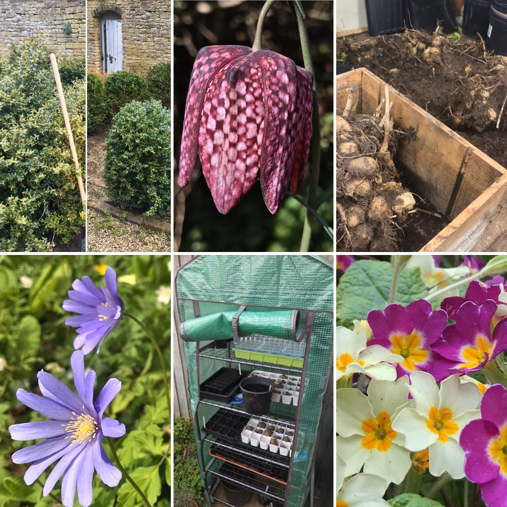 Gary Webb's Garden Journal