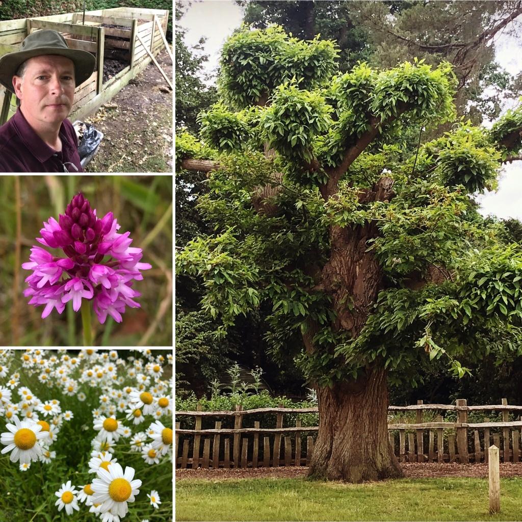 GardeningWays Journal Photo's for 21 June 2020. Gary Webb.