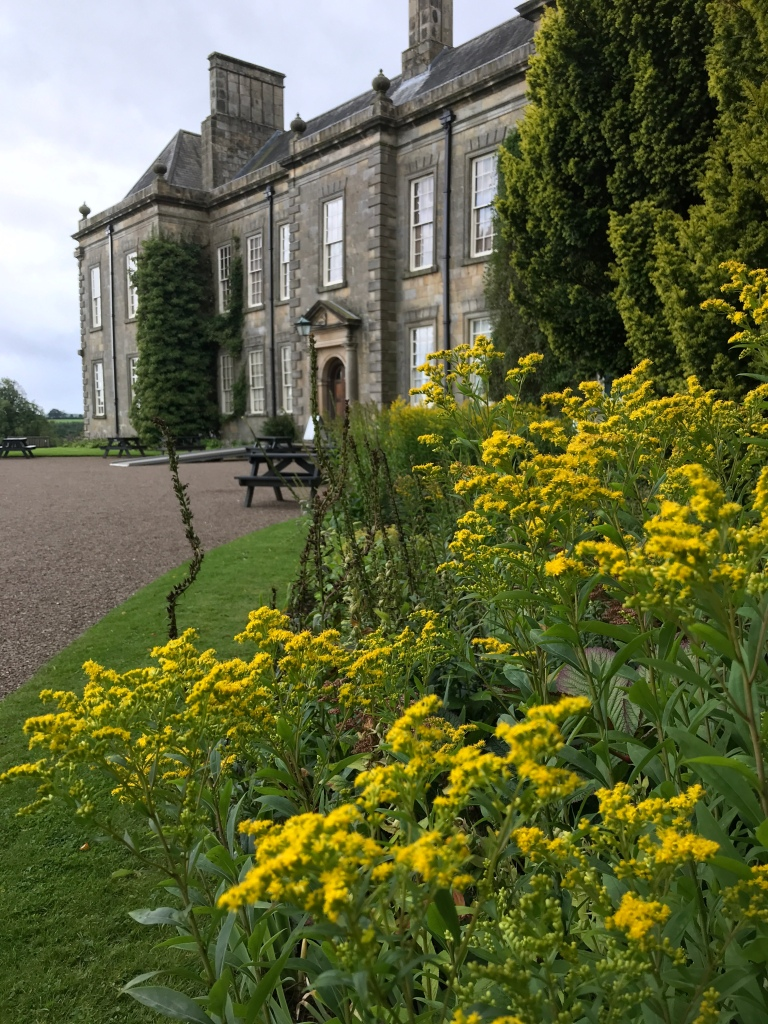 Golden Rod before the Hall at Wallington