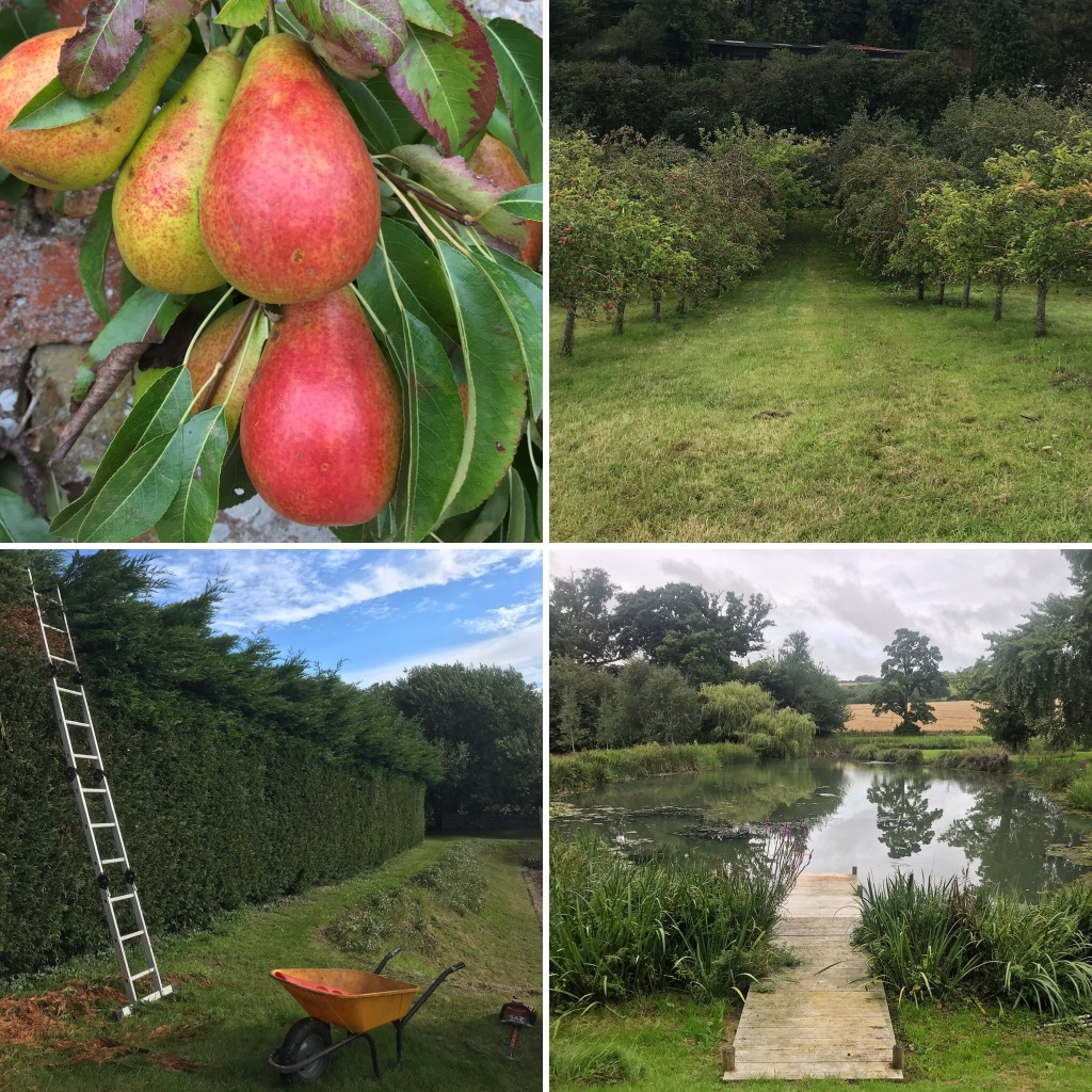 Gardening ways images for first week in September; an orchard and ripening fruit