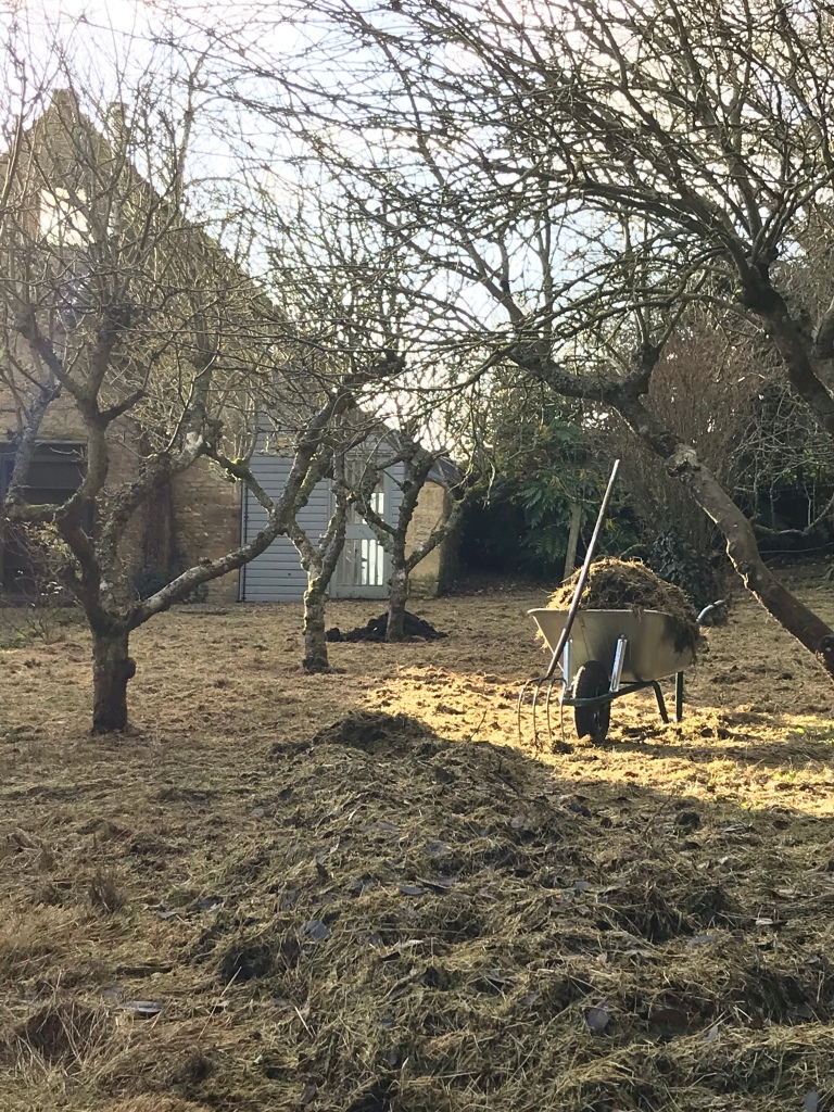A small orchard in a Cotswolds garden, showing the grass being recovered prior to winter pruning.