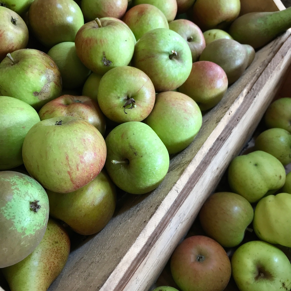 Boxes of freshly harvested apples and pears