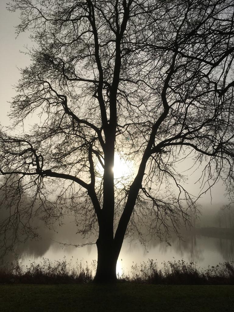 Tree silhouetted on the lakeside atVompton Verney