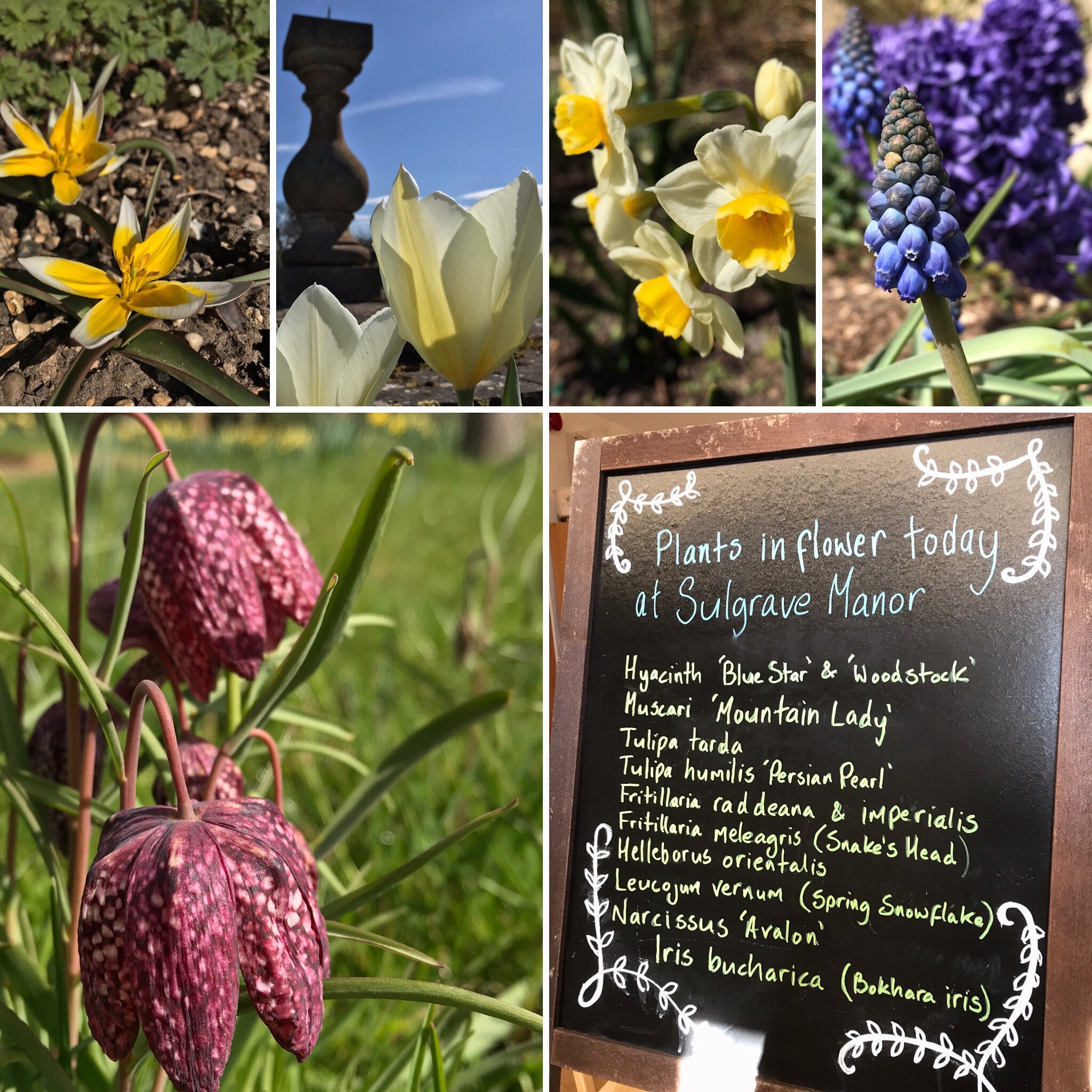 Flowers and a notice board at garden entrance to say what is in flower