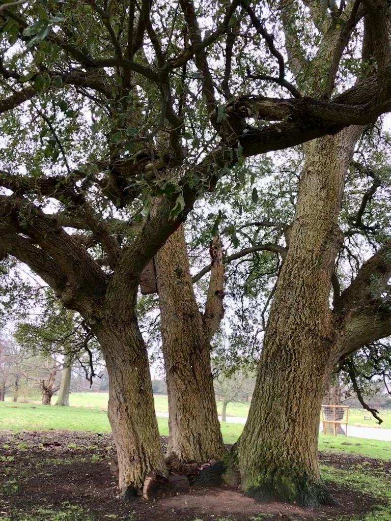 Tree trunks in parkland setting