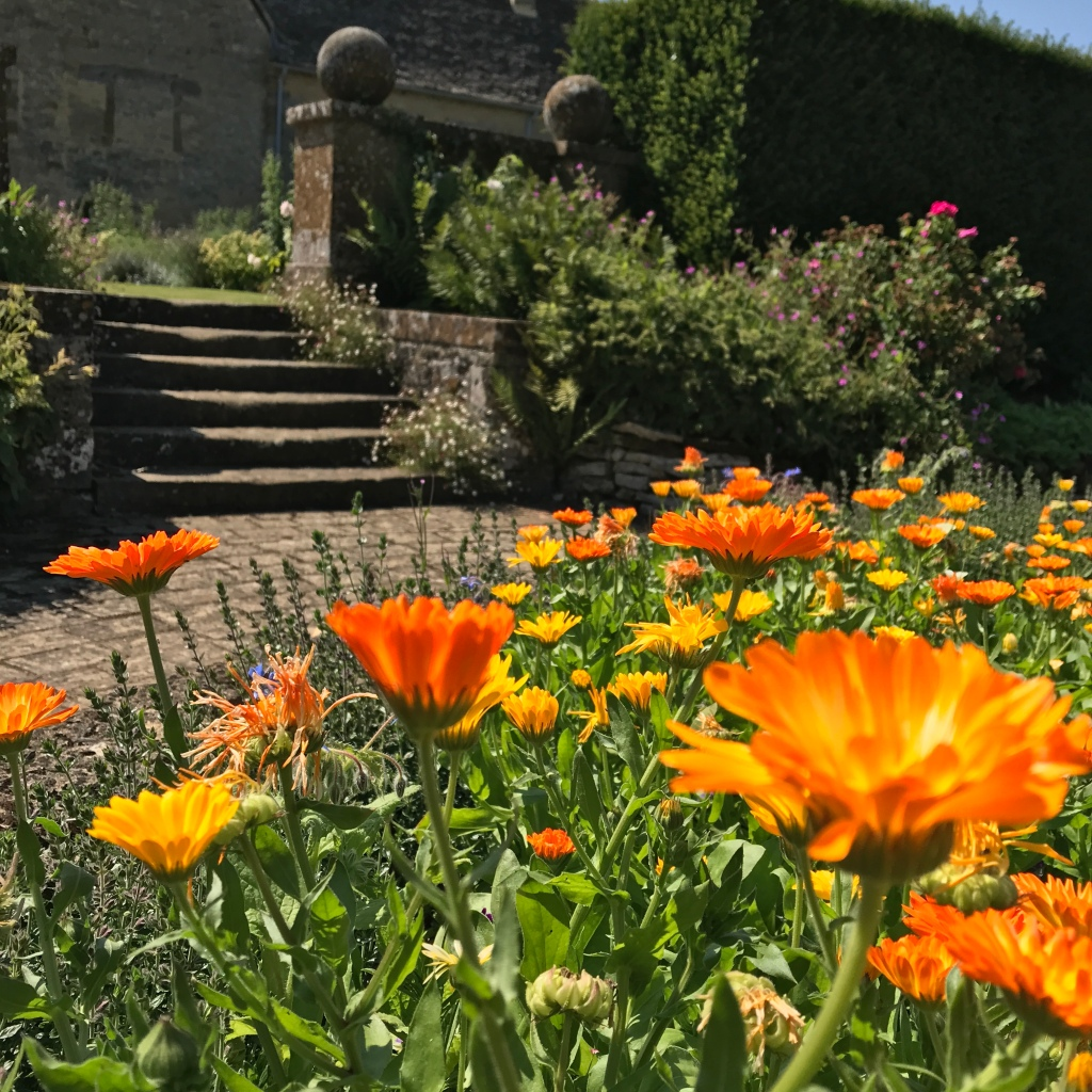 A raised bed packed with bright orange pot marigolds at Sulgrave manor and garden, by Head Gardener Gary Webb